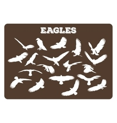 Eagles In Various Poses vector image vector image