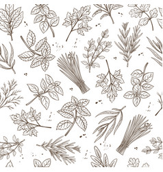 seamless pattern herbs vector image vector image