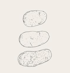 set of pototoes hand drawn sketch vector image vector image