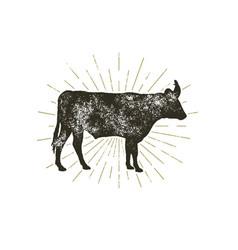 vintage hand drawn cow icon farm animal vector image