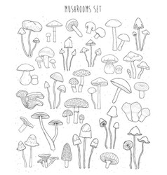 collection of hand drawn different types mushrooms vector image vector image