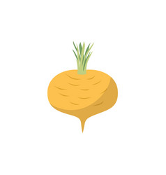 turnip isolated yellow vegetables on white vector image