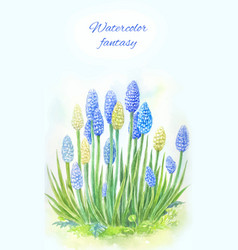 Viper onion mouse hyacinth or muscari watercolor vector