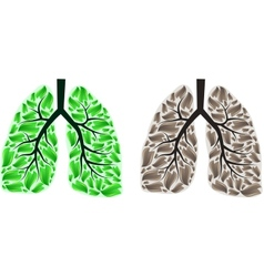 Two lungs vector image vector image