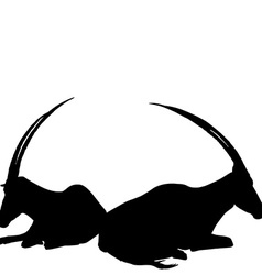 Two sitting antelopes silhouettes vector