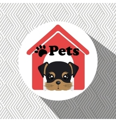 dog pets house icon vector image
