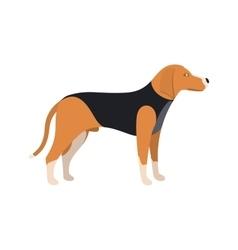 Beagle Dog - color serious dog Beagle breed vector image vector image