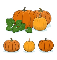 Pumpkin vegetable edible fruit vector
