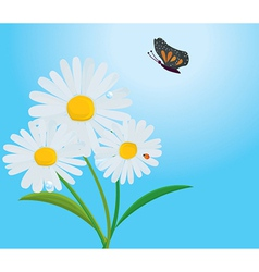 Daisy with butterfly vector