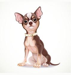 Cute little chihuahua dog wearing a collar vector