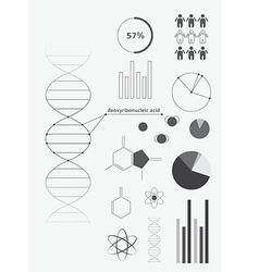 Infographics deoxyribonucleic acid dna vector