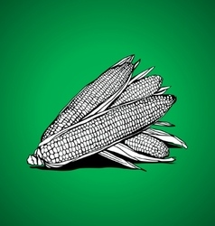 Three corn vector