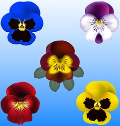 Pansy and violets vector