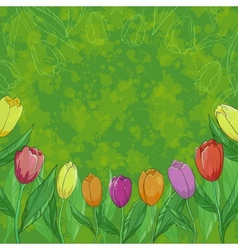 Flowers tulips on green background vector image