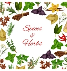 Spices and herbs in round shape poster vector