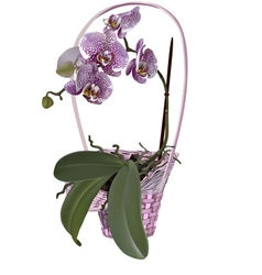 Photorealistic wicker floral basket with orchid vector image vector image