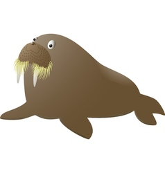 Isolated walrus on white background vector image vector image
