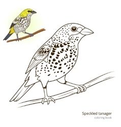 Speckled tanager color book vector image vector image