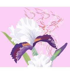 Iris on a pink background vector