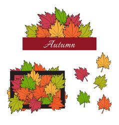 Autumn maple leaves vector