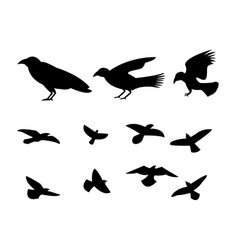 Silhouette flying raven bird vector