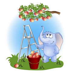 Elephant collects apples vector