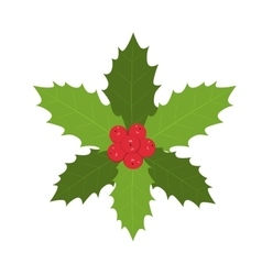 Traditional christmas holly with red berries vector