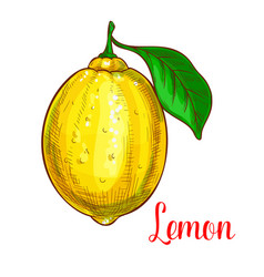 Lemon sketch isolated fruit icon vector