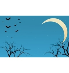 Silhouette of bat flying at night vector image