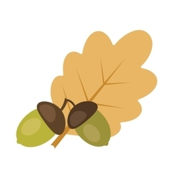 Two acorns and oak leaf vector