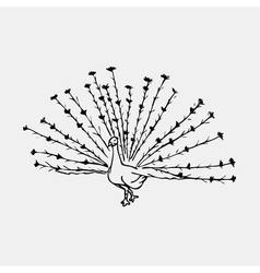 Hand-drawn pencil graphics peacock bird engraving vector