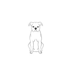 American staffordshire terrier cartoon dog icon vector