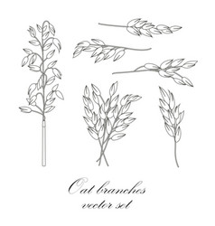 Oat branches set - vector