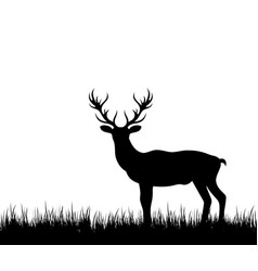 Silhouette deer stag reindeer in forest grass vector