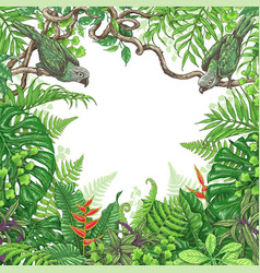 tropical plants and birds frame vector image