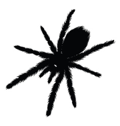 Big spider silhouette vector