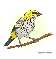 Speckled tanager bird educational game vector
