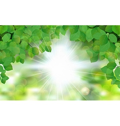 Summer fresh leaf green leaves with sun rays vector