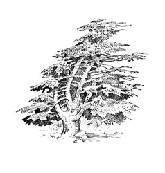 set of hand drawn trees italian cypress and stone vector image vector image