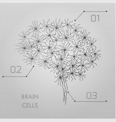 Brain cells connectome vector
