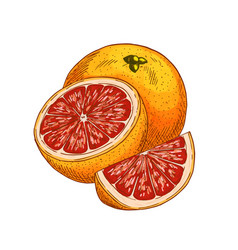 Red orange fruit sketch isolated icon vector