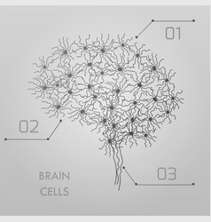 Brain cells connectome vector