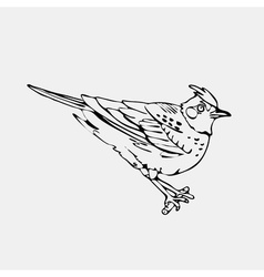 Hand-drawn pencil graphics lark oriole chickadee vector