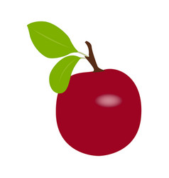 Isolated plum fruit vector