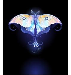 Moonlight Butterfly vector image