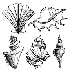 Sea shells collection vector image vector image