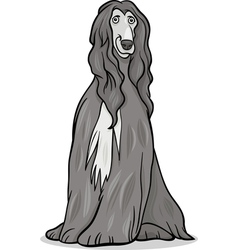 Afghan hound dog cartoon vector