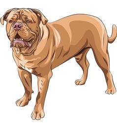 French Mastiff vector image vector image