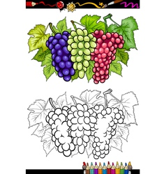 grapes fruits for coloring book vector image