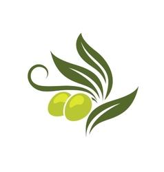 Green olives branch vector image